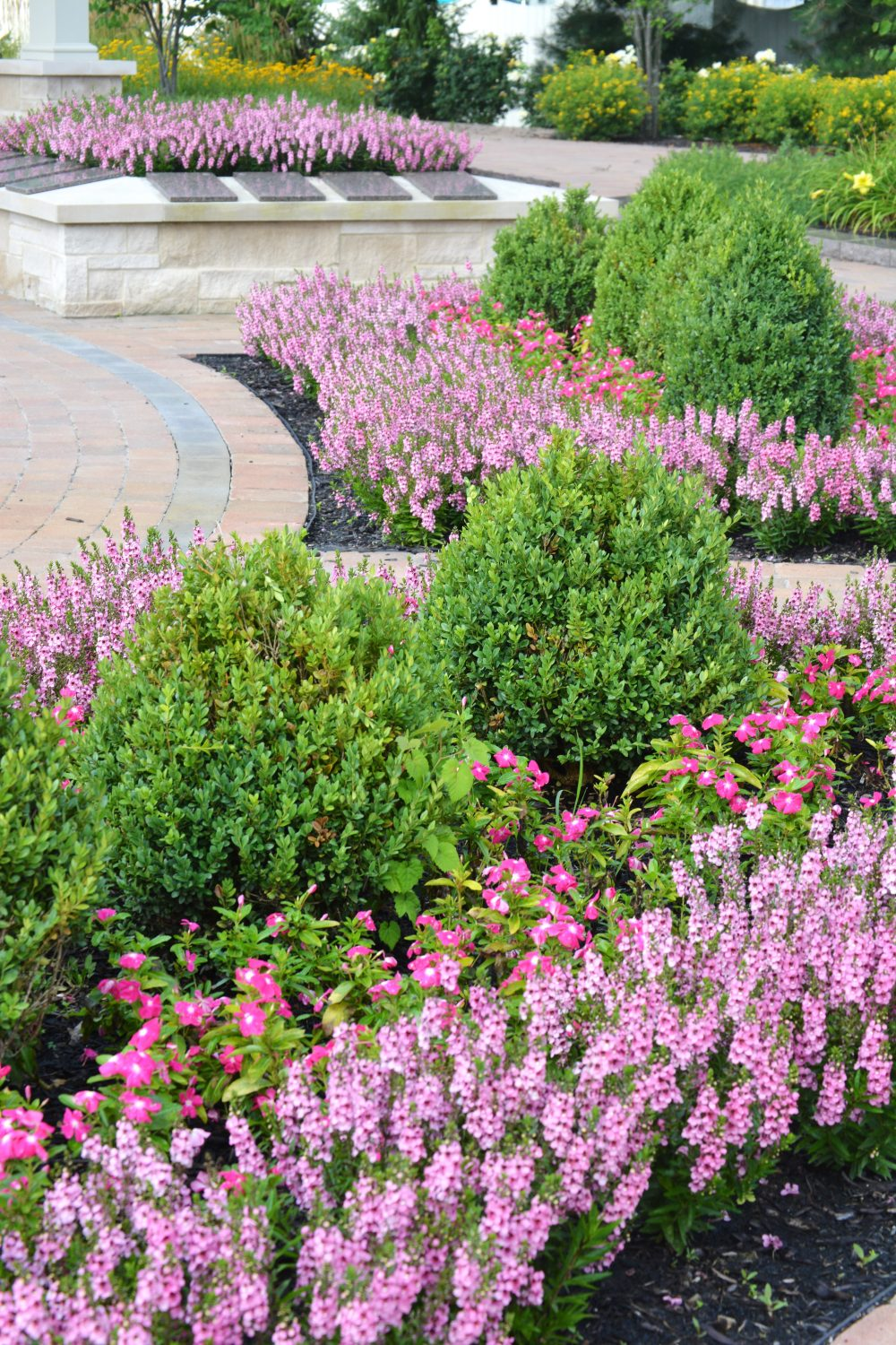 Shrubs and annuals in mulched bed